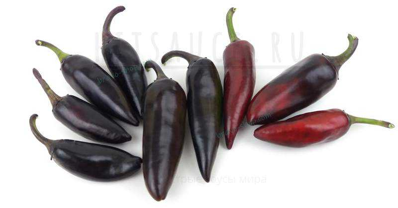 Черный Болгарский | Black Hungarian Pepper