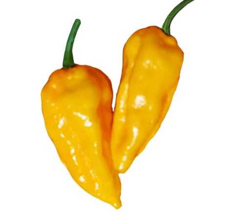 Датил / Datil Pepper