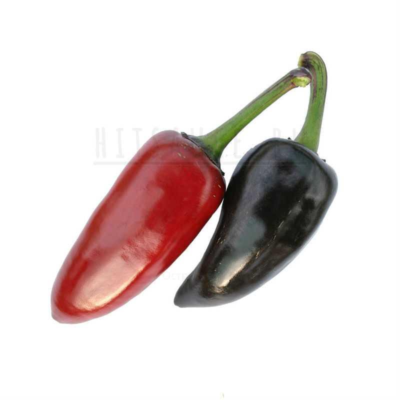 Фиолетовый Халапеньо | Purple Jalapeño Pepper